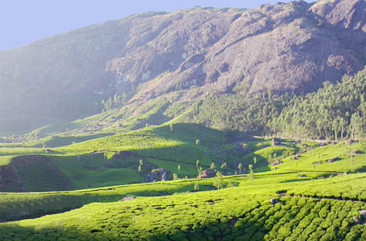 best hill stations in india for honeymoon-Munnar