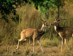 corbett-nainital-tour-packages