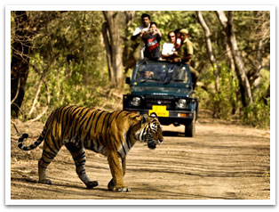 Jim-Corbett-Tour