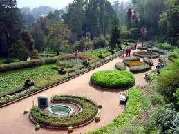 ooty-honeymoon-packages